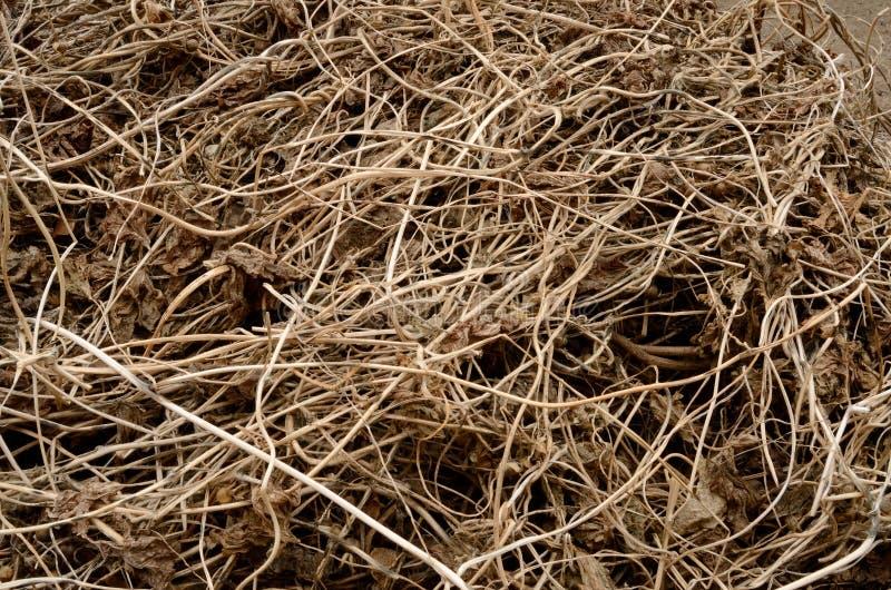 Οι ξηρές καφετιές άμπελοι περικοπών είναι ομοιόμορφα κατασκευασμένες που συνδυάζονται στο έδαφος στοκ φωτογραφία