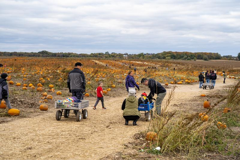 Οι οικογένειες καθορίζουν να επιλέξουν τις κολοκύθες από ένα μπάλωμα κολοκύθας μια ψυχρή ημέρα πτώσης στοκ εικόνες με δικαίωμα ελεύθερης χρήσης