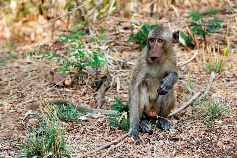 Οι πίθηκοι κάθονται στις άγρια περιοχές στοκ φωτογραφία με δικαίωμα ελεύθερης χρήσης