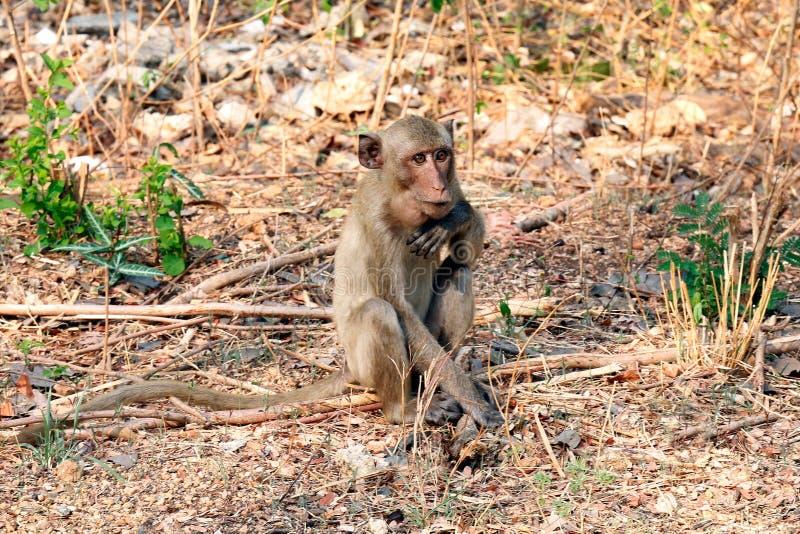Οι πίθηκοι κάθονται στις άγρια περιοχές στοκ φωτογραφία