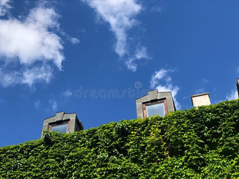Οι παλιές σκεπές κτιρίων με πράσινο φόντο αυξάνονται με μπλε φόντο στοκ εικόνα