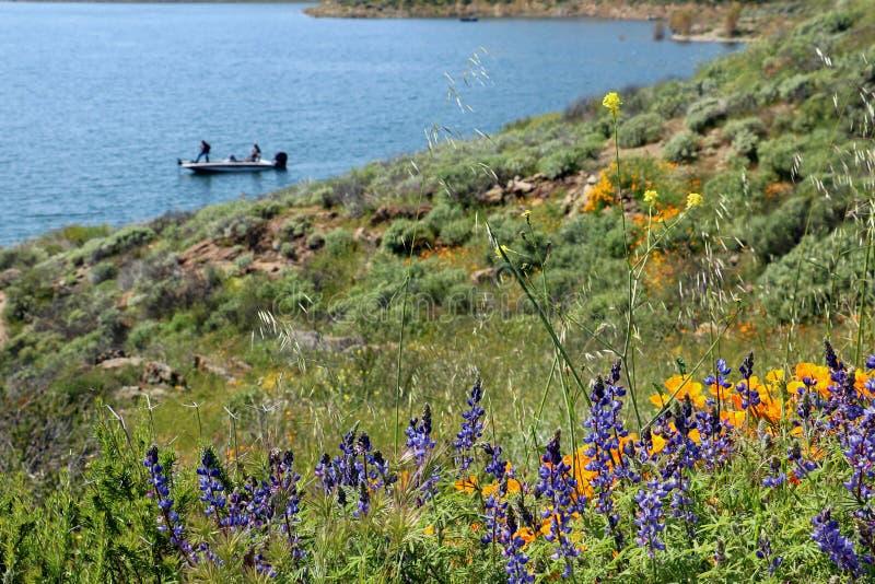 Οι παπαρούνες και τα wildflowers lupine καλύπτουν έναν λόφο κοντά σε μια λίμνη στοκ εικόνα με δικαίωμα ελεύθερης χρήσης