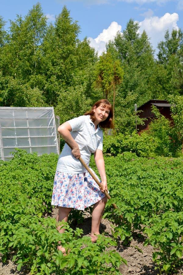 Οι πατάτες λόφων γυναικών σε ένα τμήμα χωρών στοκ φωτογραφία