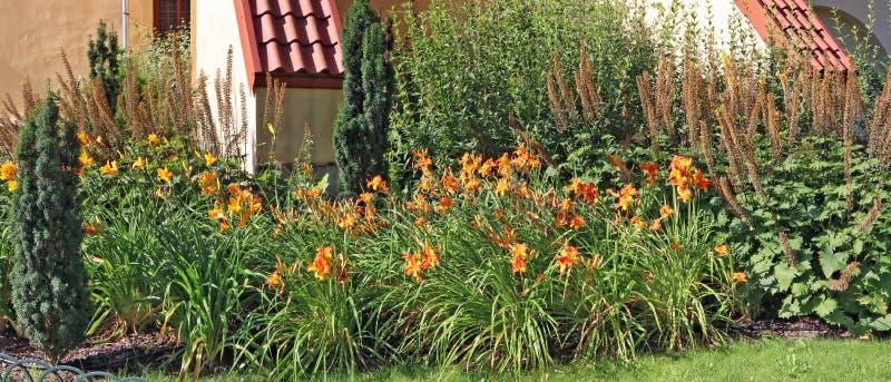 Οι πορτοκαλιές ίριδες αυξάνονται σε ένα κρεβάτι λουλουδιών κοντά σε μια αγροικία στοκ εικόνα