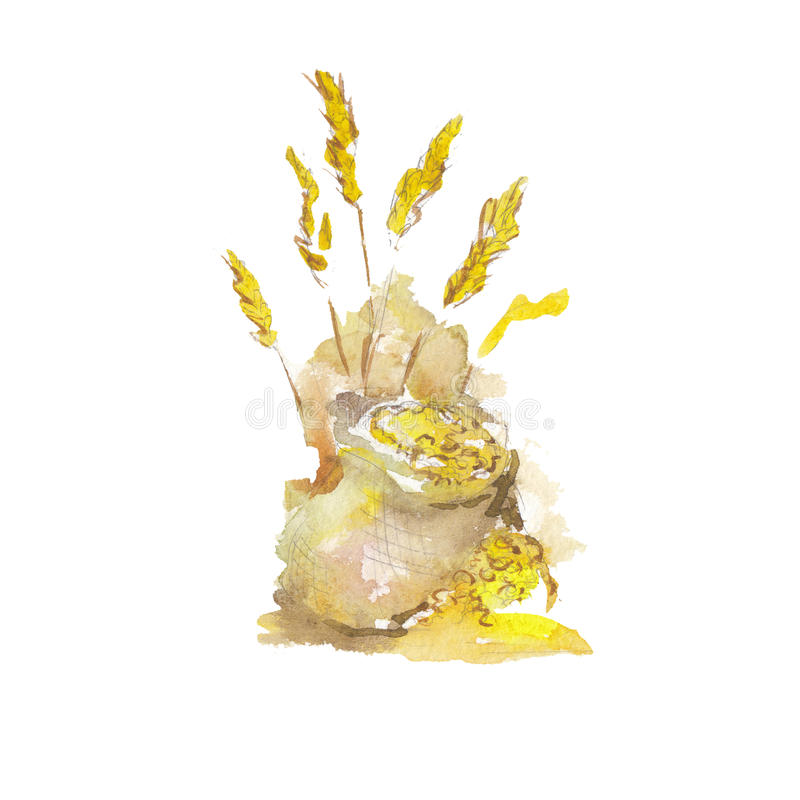 Οι πολιτισμοί βύνης που απομονώνονται σε ένα άσπρο υπόβαθρο, απεικόνιση watercolor διανυσματική απεικόνιση