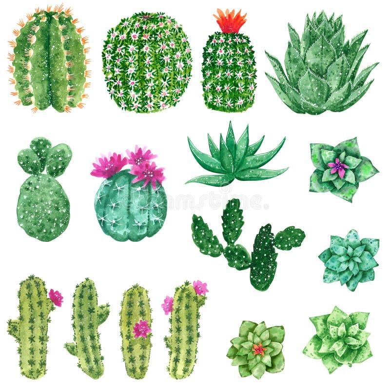 Οι πράσινοι κάκτοι που ανθίζουν με το ροζ και το πορτοκάλι ανθίζουν, συρμένη χέρι απεικόνιση watercolor απεικόνιση αποθεμάτων