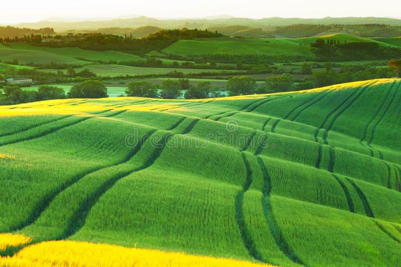 Οι πράσινοι κυματιστοί λόφοι έλαμψαν με έναν ήλιο αύξησης στοκ φωτογραφία με δικαίωμα ελεύθερης χρήσης
