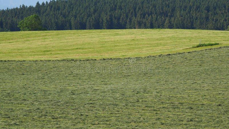 Οι πράσινοι τομείς με τη χλόη και το σανό κόβουν έτοιμο να συγκομιστούν Λόφοι στη νότια Γερμανία όχι μακριά από τις Άλπεις στοκ εικόνα