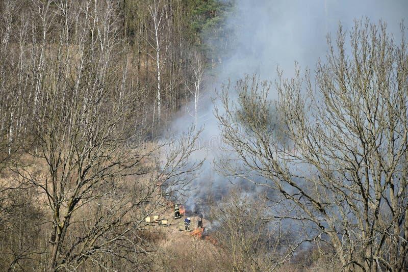 Οι πυροσβέστες εξαφανίζουν μια πυρκαγιά της ξηράς χλόης δίπλα στο δάσος, καπνός που αυξάνεται κοντά στις κυψέλες στοκ φωτογραφίες