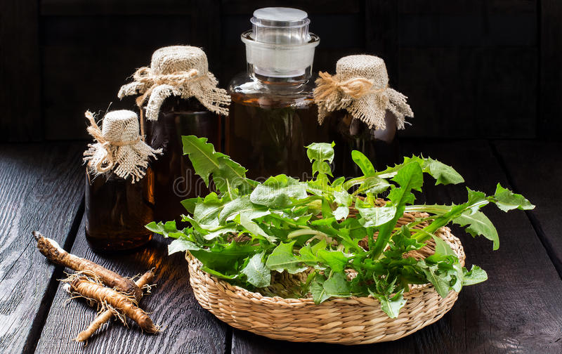 Οι ρίζες και τα φύλλα της πικραλίδας, tincture και του σιροπιού στα μπουκάλια στοκ φωτογραφίες με δικαίωμα ελεύθερης χρήσης