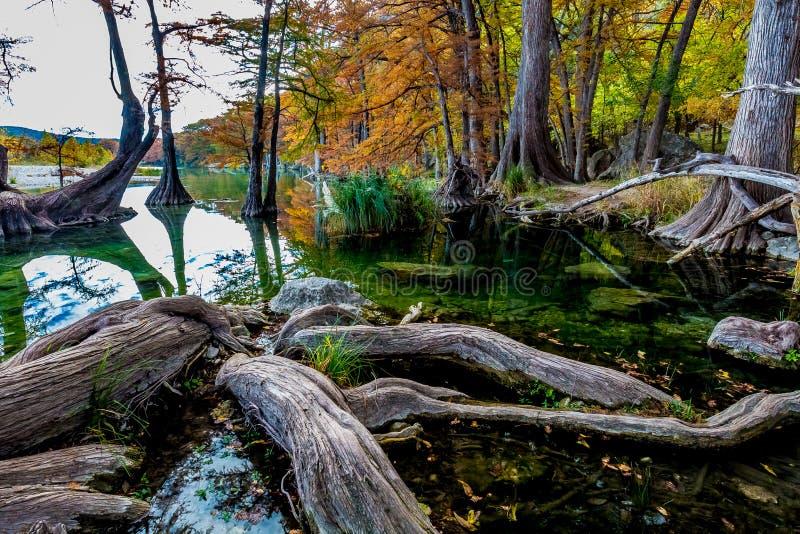 Οι ρίζες κυπαρισσιών πτώσης συγκεντρώνουν το κρατικό πάρκο, Τέξας στοκ εικόνα με δικαίωμα ελεύθερης χρήσης