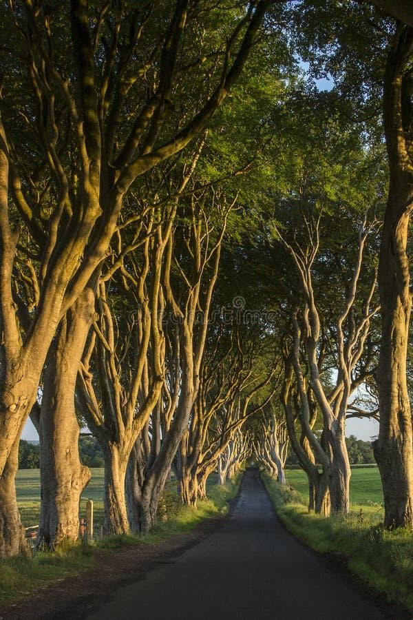 Οι σκοτεινοί φράκτες - κομητεία Antrim - Βόρεια Ιρλανδία στοκ φωτογραφία