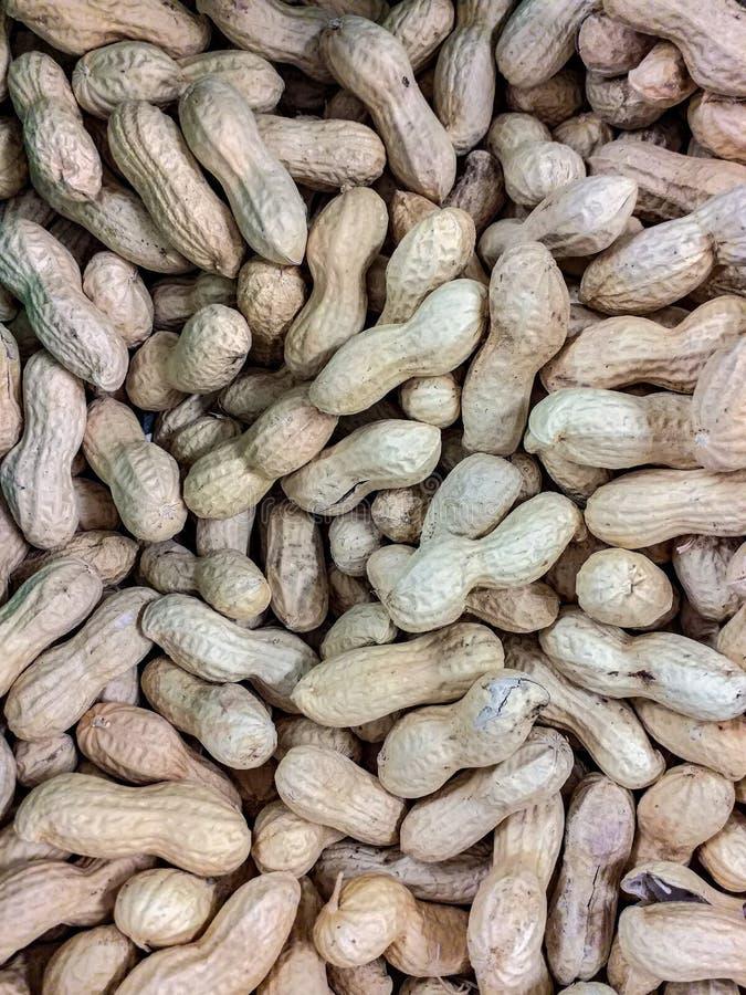 Οι σπόροι φυστικιών, κάλεσαν επίσης το spagnolette, φυστίκια, bagigans, barbagigi, calacavisi, scacchetti, cecini, gallette, marc στοκ εικόνες με δικαίωμα ελεύθερης χρήσης