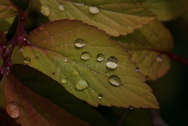 Οι σταγόνες βροχής βγάζουν φύλλα επάνω στοκ εικόνα
