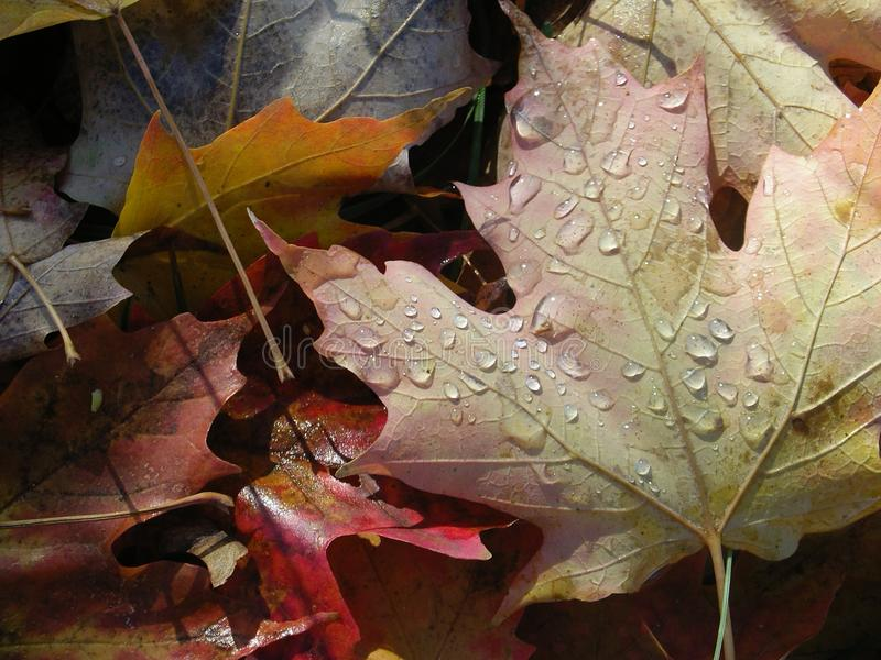 Οι σταγόνες βροχής πέφτουν στο φύλλο μου στοκ φωτογραφίες