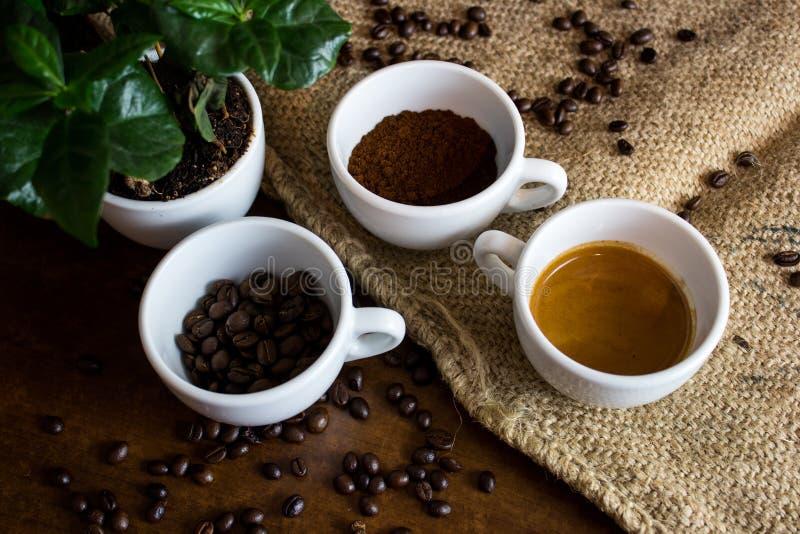 Οι τέσσερις φάσεις ζωής καφέ στοκ εικόνες με δικαίωμα ελεύθερης χρήσης