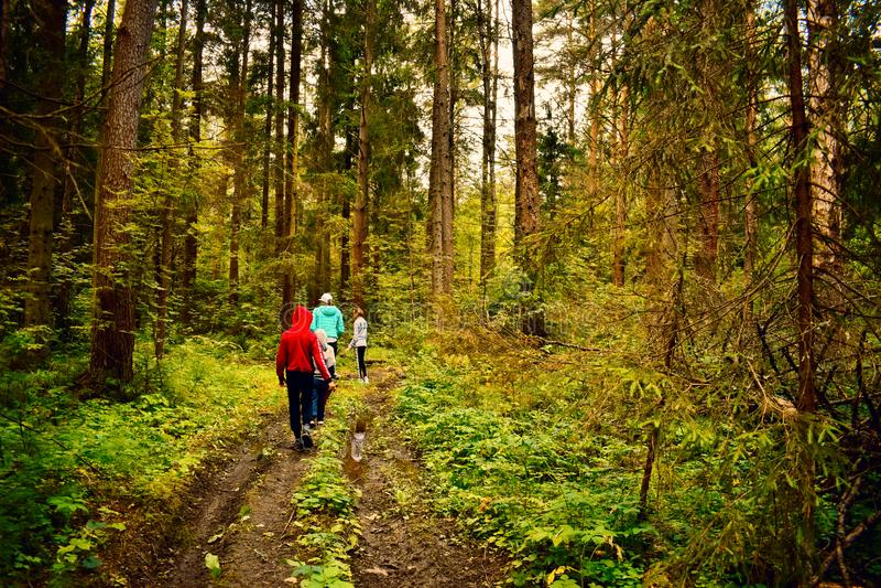 Οι ταξιδιώτες πηγαίνουν στο πράσινο δάσος στο μονοπάτι στο καλοκαίρι στοκ φωτογραφία