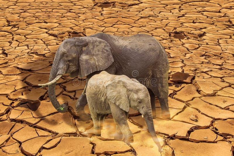 Οι τελευταίοι ελέφαντες επιβίωσης στη ραγισμένη γη στοκ φωτογραφίες