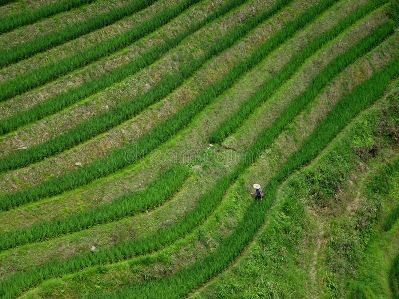 Οι τομείς ορυζώνα πεζουλιών στην περιοχή γύρω από Yangshuo στην επαρχία Guangxi στην Κίνα στοκ εικόνες