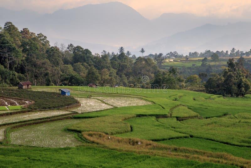 Οι τομείς ορυζώνα, Sumatra στοκ εικόνες