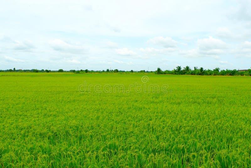 Οι τομείς που φυτεύονται πράσινοι από τους αγρότες στοκ φωτογραφία