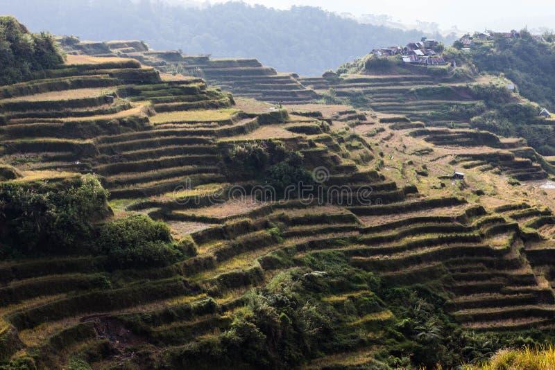 Οι τομείς ρυζιού είναι όμορφοι στοκ φωτογραφία