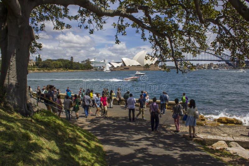 Οι τουρίστες βλέπουν τη λιμενικές γέφυρα και τη Όπερα του Σίδνεϊ από τους βασιλικούς βοτανικούς κήπους στοκ εικόνα με δικαίωμα ελεύθερης χρήσης