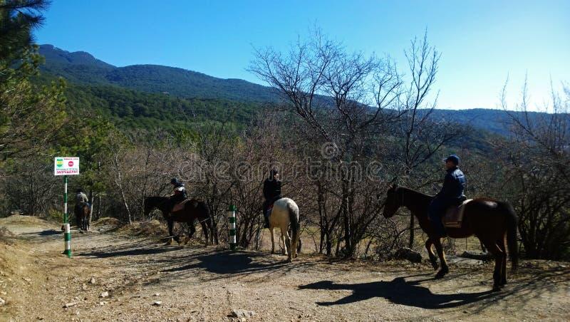 Οι τουρίστες κάνουν την οδήγηση πλατών αλόγου στην επαρχία: βουνά, δάσος, μπλε ουρανός στοκ φωτογραφία
