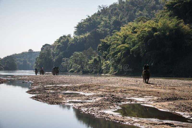 Οι τουρίστες στην οδοιπορία ελεφάντων σε έναν ελέφαντα στρατοπεδεύουν στοκ φωτογραφίες με δικαίωμα ελεύθερης χρήσης