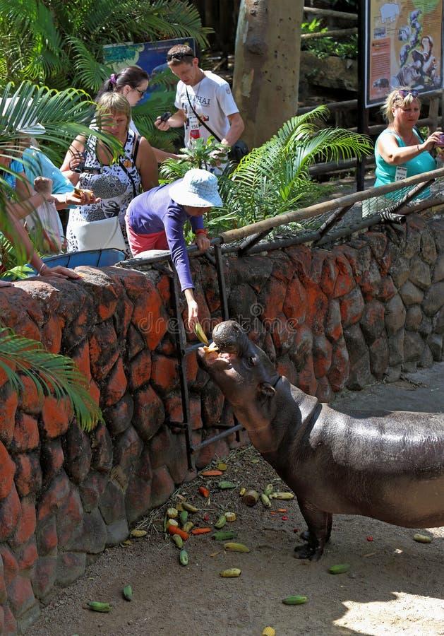 Οι τουρίστες ταΐζουν τα ζώα στο βασίλειο της Ταϊλάνδης στοκ εικόνα με δικαίωμα ελεύθερης χρήσης
