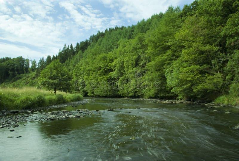 Οι τρέχοντας άγρια περιοχές Ourthe, που περιβάλλονται από το πράσινο δάσος στοκ φωτογραφίες με δικαίωμα ελεύθερης χρήσης