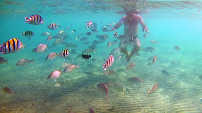 οι τροφές ατόμων αλιεύουν υποβρύχιο σε μια μάσκα για την κατάδυση στη Ερυθρά Θάλασσα στοκ φωτογραφία με δικαίωμα ελεύθερης χρήσης