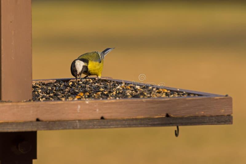 Οι τροφές πουλιών στοκ φωτογραφίες