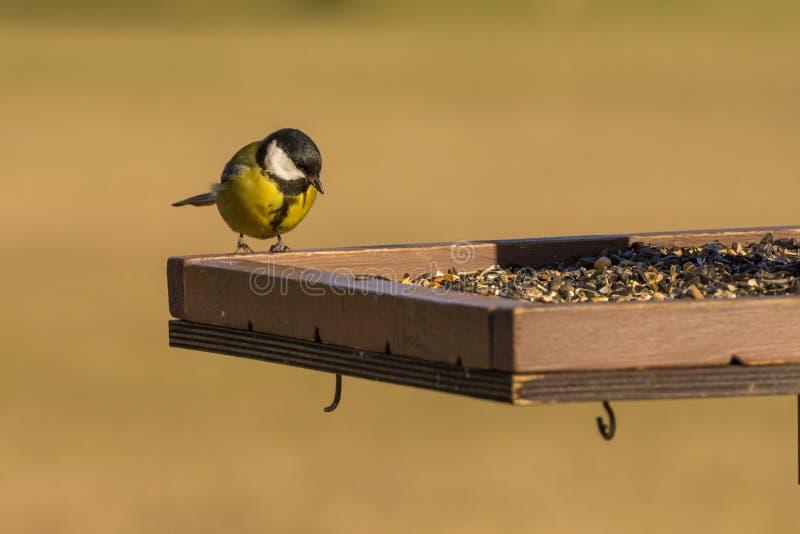 Οι τροφές πουλιών στοκ φωτογραφία με δικαίωμα ελεύθερης χρήσης