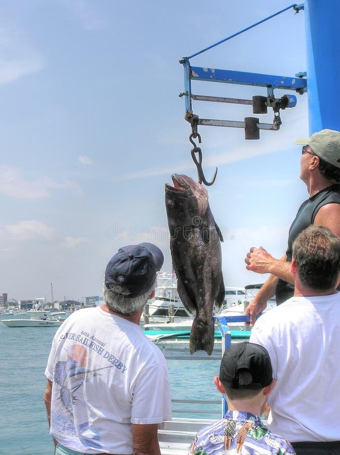 Οι υπερήφανοι ψαράδες ζυγίζουν τα ψάρια τους στη μαρίνα στοκ εικόνες