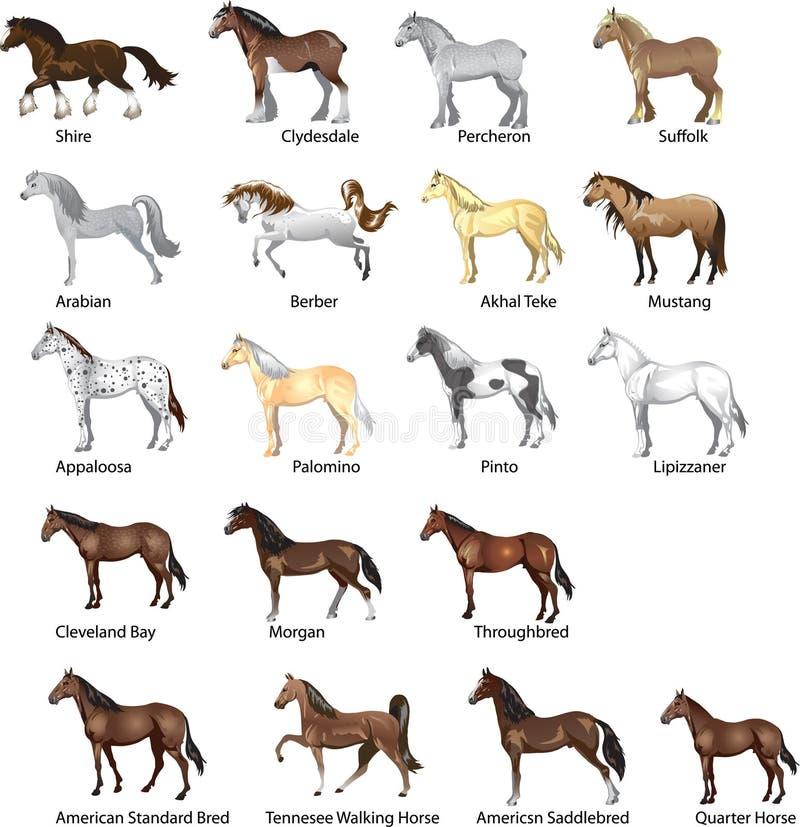 Οι φυλές αλόγων θέτουν, το άλογο διάφορων επιβητόρων, ζώων, καλπασμού και έλξης - απεικόνιση απεικόνιση αποθεμάτων