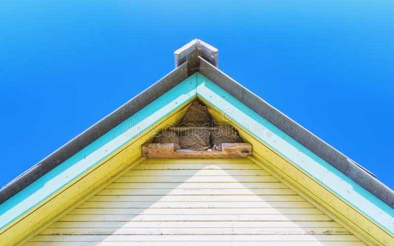 Οι φωλιές καταπίνουν κάτω από τη στέγη ενός του χωριού σπιτιού στοκ εικόνα