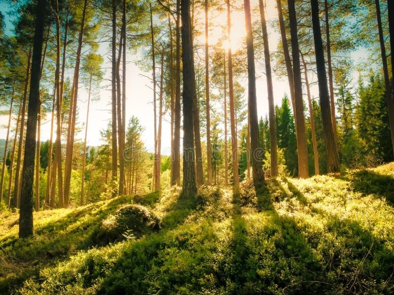 Οι φωτεινές ακτίνες του φωτός του ήλιου που λάμπουν μέσω του ψηλού αει στοκ φωτογραφία