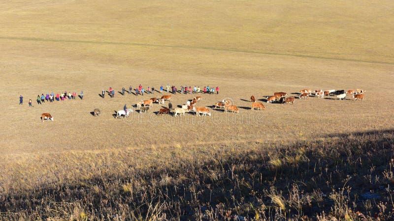 Οι φωτογράφοι παίρνουν τις εικόνες των βοοειδών στα λιβάδια το φθινόπωρο στοκ εικόνες με δικαίωμα ελεύθερης χρήσης