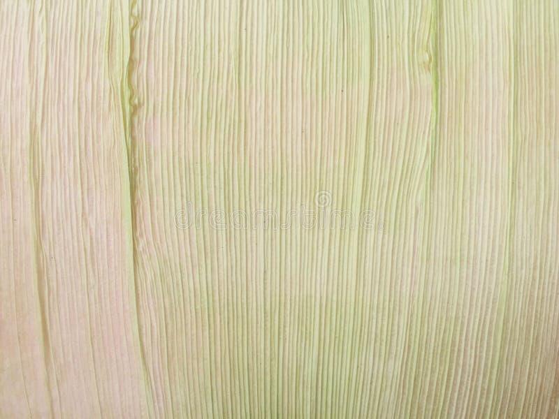 Οι φλοιοί καλαμποκιού που απομονώνονται στοκ εικόνες
