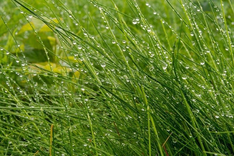 Οι χάντρες της βροχής προσκολλώνται στη μακριά χλόη στοκ φωτογραφίες με δικαίωμα ελεύθερης χρήσης