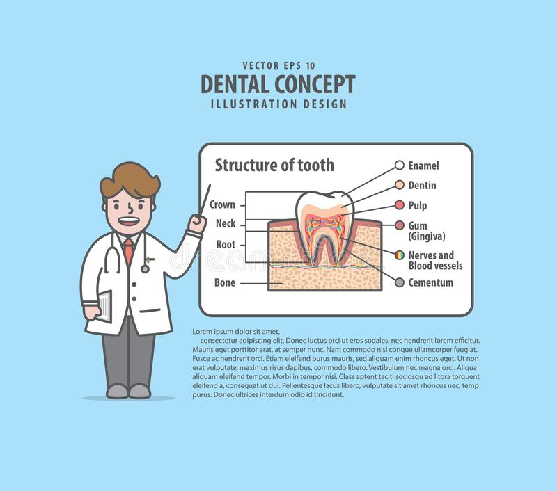 Οι χαρακτήρες γιατρών μιλούν για τη δομή του σχεδιαγράμματος δοντιών illust διανυσματική απεικόνιση