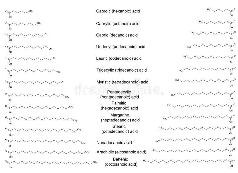 Οι χημικοί δομικοί τύποι των σημαντικότερων κορεσμένων λιπαρών οξέων ελεύθερη απεικόνιση δικαιώματος