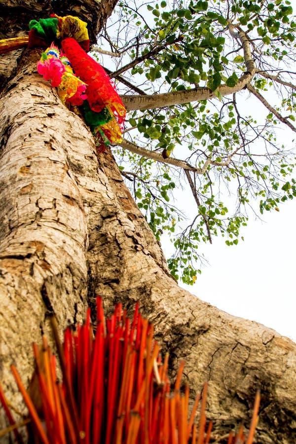 Οι χρωματισμένα κορδέλλες και τα ραβδιά θυμιάματος στο ιερό δέντρο στοκ εικόνες