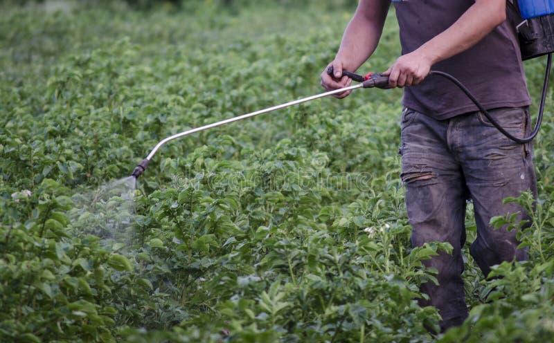 Οι ψεκάζοντας άνθρωποι με την πατάτα δηλητηριάζουν από τους κανθάρους στοκ φωτογραφία με δικαίωμα ελεύθερης χρήσης