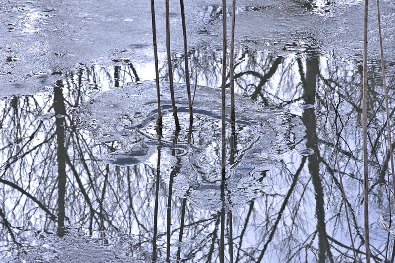 Οι ψηλοί μίσχοι των καλάμων πετούν τις σκοτεινές αντανακλάσεις στα παγωμένα νερά στοκ φωτογραφίες με δικαίωμα ελεύθερης χρήσης