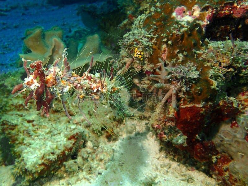 Οι όμορφες, υγιείς και όμορφες κοραλλιογενείς ύφαλοι στο νησί Sipadan, Semporna, Tawau Sabah, Μαλαισία, Μπόρνεο στοκ εικόνα