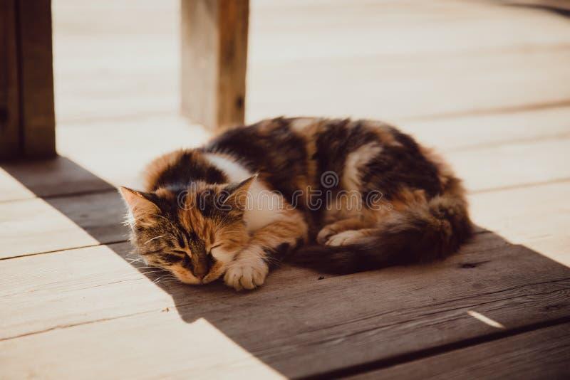 Οι ύπνοι γατών στη σκιά στοκ εικόνες