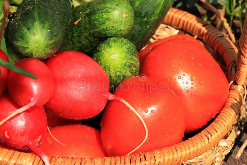 Οι Juicy ντομάτες, τα αγγούρια και τα ραδίκια σε ένα καλάθι στον κήπο που περιβάλλεται από την άνοιξη ανθίζουν με την κινηματογρά στοκ φωτογραφίες με δικαίωμα ελεύθερης χρήσης