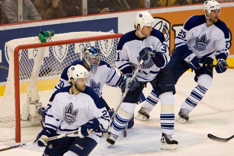 Οι Maple Leafs ψάχνουν τη σφαίρα στοκ εικόνες